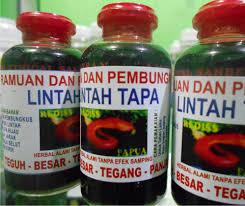 minyak lintah papua herbal sehat com