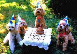 dog birthday party dog birthday unique ideas for a diy dog birthday party