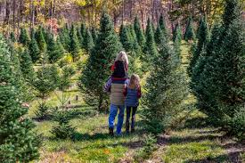 cut your own tree at a north carolina christmas tree farm