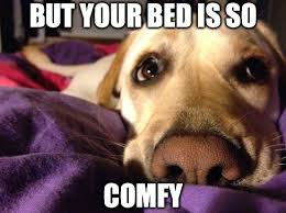 Dog In Bed Meme - have you engaged in the never ending battle of dog vs human s bed
