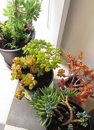 creative jewish mom container gardening