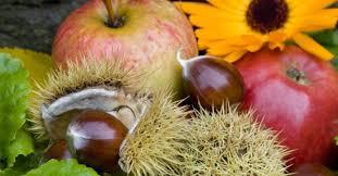 cuisine automne découvrir les fruits d automne et leurs utilisations node vocab