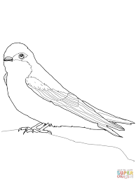 tree swallow coloring page free printable coloring pages