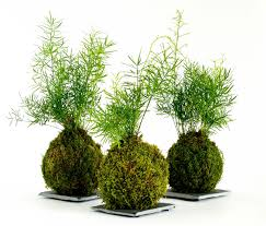 how to make a japanese moss ball u2013 the art of kokedama