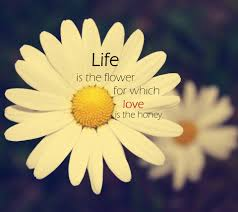 Beautiful Quotes About Life And Love by Love Quotes For Him With Flowers Quotes About Love And Flowers