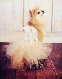 dog wedding dress dog tutu wedding dress for breeds hair bow included tutu