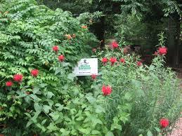 Botanical Gardens Volunteer by The Wylde Center Oakhurst Garden