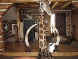 giraffe taxidermy pictures hunting
