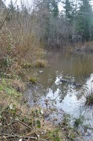 woodbrook native plant nursery wetlands my own personal jungle