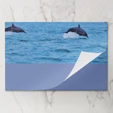 unique dolphin gifts dolphin marine animal swim dive destiny destiny s paper pad