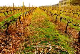 vine pruning cascade cliffs winery