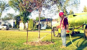 how to water trees city of edmonton