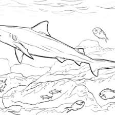 coloring pages bull shark kids drawing coloring pages marisa