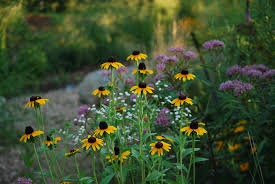native plants native plants wild ones red cedar chapter lansing michigan