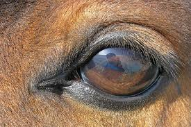 eyes sensitive to light at night equine vision wikipedia