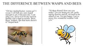 the difference between wasps and bees imgur