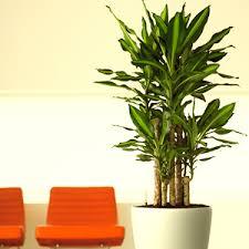 top 10 plants buy 6000 nursery plants n seeds online