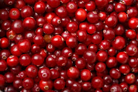 is it thanksgiving without cranberries wonderopolis