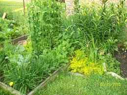 may 2010 cheryl u0027s garden goodies