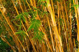 bamboo poles u2013 bamboo products backyard x scapes zozeen