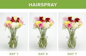 How To Draw A Vase Of Flowers How To Make Flowers Last Longer 9 Tricks Proflowers