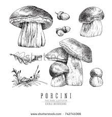 cep mushrooms vector sketch set porcini stock vector 742741066
