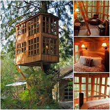 Cool Tree Houses 776 Best Tree Houses Images On Pinterest Architecture