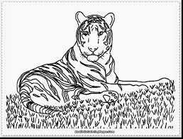 good tiger coloring drawings with tiger coloring page