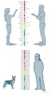 funny colors colors according to women men dogs and programmers weknowmemes