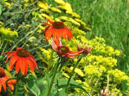 Proper Color Scheme Life In Robin U0027s Nest A Garden Of Many Colors