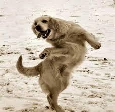 Dancing Dog Meme - dancing dog blank template imgflip
