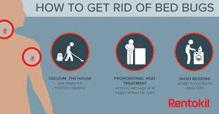 remedies for bed bug bites bed bug bites what you need to know