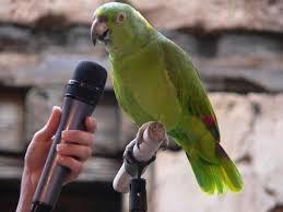 Parrot Meme - parrot meme generator imgflip