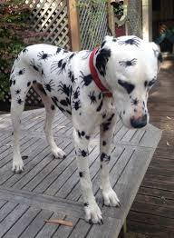 Dogs Halloween Costumes 12 Dog Halloween Costumes 2014 Weknowmemes