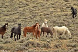 mustang adoption canon city mustangs home