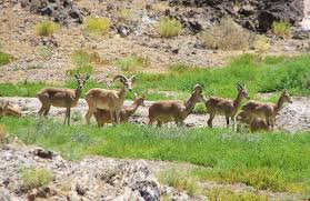 wildlife tours images Iran wildlife tours surfiran travel and tours jpg