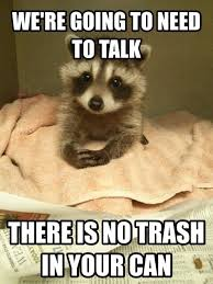 Racoon Meme - responsible raccoon meme guy