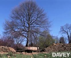 best time to transplant trees pine oak maple and fruit