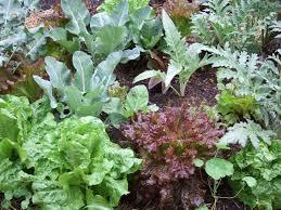 growing vegetables in a small garden plot u2014 veggie gardening tips