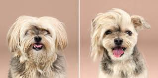 24 photos of scruffy dogs before and after their summer haircut