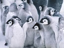 Funny Penguin Memes - 30 facts to know about penguins funny pictures quotes memes