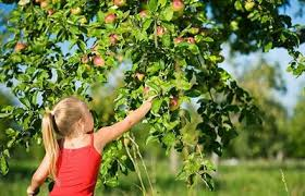 11 u pick apple orchards near chicago kidtrail com