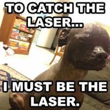 Laser Meme - i m going bald good yoda memes pinterest memes