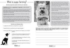 puppy farming worksheet u0026 oscar u0027s law