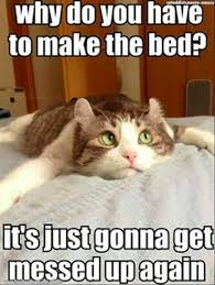 Cute Kitty Memes - why do you have to make the bed funny pet humor cute kitty