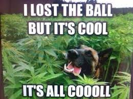 Lost Dog Meme - i lost the ball dog meme