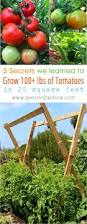 gardening ideas best 25 growing tomatoes ideas on pinterest tomato garden grow