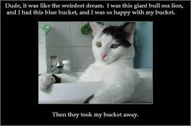 Meme Bucket - i has a bucket image macros