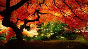 fall pumpkin wallpaper hd fall scenery wallpapers free download pixelstalk net