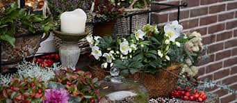online gardening bakker com buy flowerbulbs and plants online